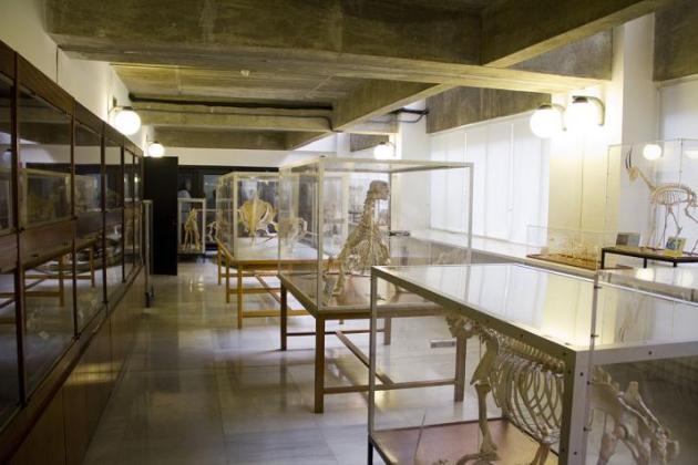 Museo-de-Anatomia-Comparada-de-Vertebrados-Fotografia-3_298