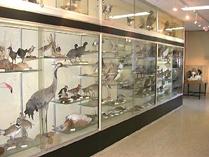 Vista general de una de las   vitrinas de vertebrados