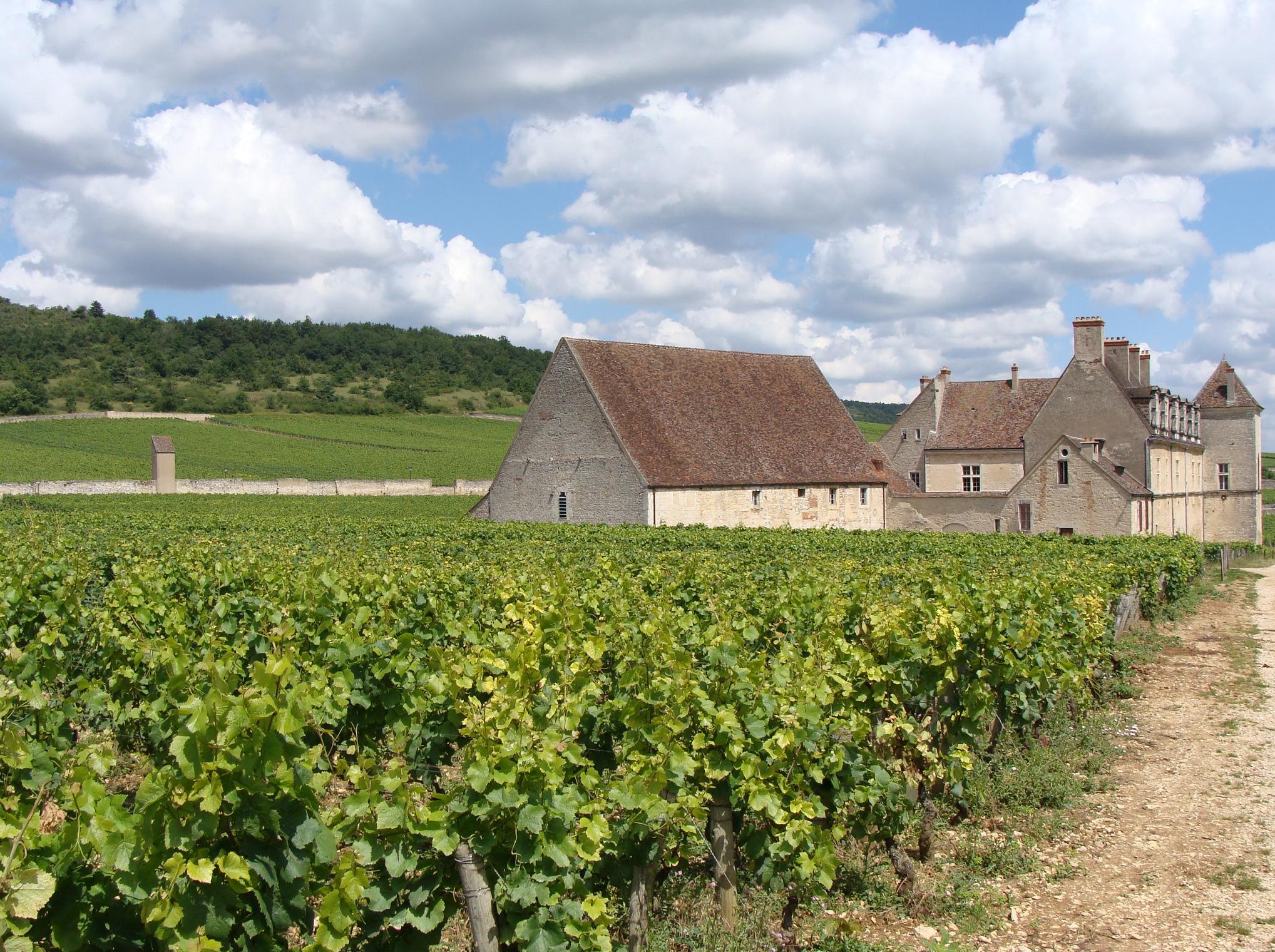 Viñedos en Borgoña, Francia.